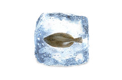 Frozen fish,ice. A frozen fish in a ice Stock Image