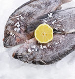 Frozen Fish Royalty Free Stock Photos