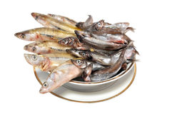 The frozen fish  on a plate Stock Photography