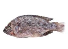 Frozen Fish Stock Photos