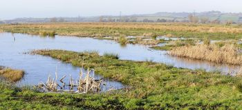 Somerset Levels. Frozen flood water on Somerset Levels Royalty Free Stock Images