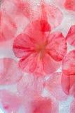 Frozen flora Stock Images