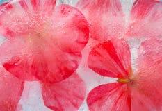 Frozen flora Royalty Free Stock Image
