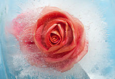Frozen flora Stock Image