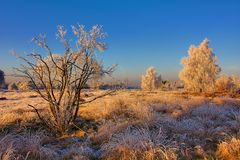 Frosted Landscape. Frozen flora and trees after sudden extreme temperature drop