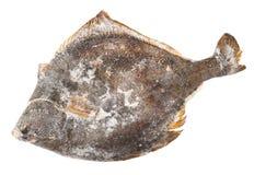 Frozen flounder Royalty Free Stock Photo