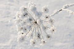 Frozen flower Stock Photos