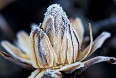 Frozen flower. Bud, macro shot stock photos
