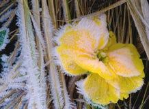 Frozen flower. Macroshot of a frozen flower in winter Stock Photos
