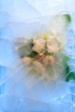 Frozen   flower of apple Stock Photos