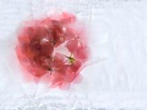 Frozen   flower of   geranium Stock Image