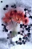 Frozen   flower of   geranium Stock Photos