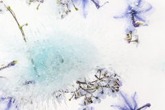 Frozen Flower. This image is from a series Called Frozen Flowers Stock Image