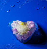 Frozen flower inside ice heart Stock Photos