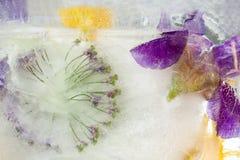 Frozen   flower of  iris Stock Photography