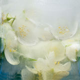 Frozen   flower of         jessamine Royalty Free Stock Images