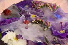 Frozen   flower of   love-in-idleness Royalty Free Stock Photo