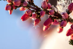 Frozen flower Stock Images