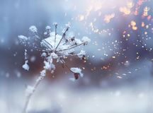 Frozen flower twig in beautiful winter snowfall crystals glitter background. Frozen flower twig in beautiful winter snowfall flying crystals glitter background stock images
