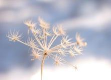Frozen flower in winter coldness. Seasonal background stock image