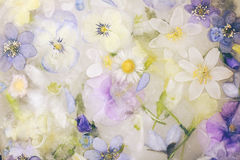 Frozen flowers Royalty Free Stock Photography