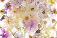 Frozen flowers Royalty Free Stock Photo