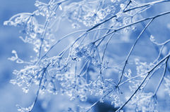 Frozen flowers Royalty Free Stock Images