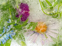 Frozen flowers and leaves Royalty Free Stock Photo