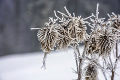 Frozen flowers in winter Stock Images