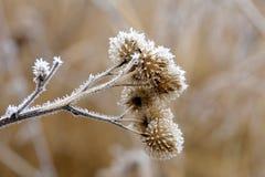 Frozen flowers Stock Images