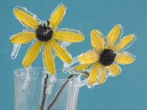 Frozen flowers. Yellow frozen flowers with ice Stock Image