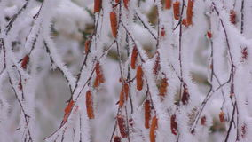 Frozen fog on tree branches  resembling icy flowers stock footage