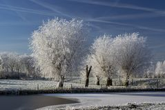 Frozen fog on trees Royalty Free Stock Photos