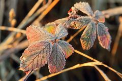 Frozen foliage Royalty Free Stock Images
