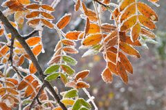 Frozen foliage Stock Image