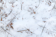Frozen Foliage in the Snow Background Royalty Free Stock Photos