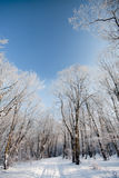 Frozen forest Stock Photography
