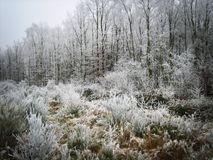 Frozen forest royalty free stock photos