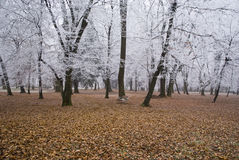 Frozen forest Stock Images