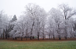 Frozen forest Royalty Free Stock Image
