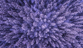 Frozen Forest from Above. Snowy Winter Forest from Above on Cold December Day. Beautiful nature Stock Image