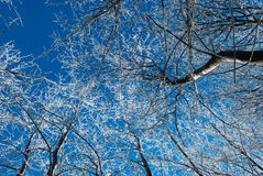 Frozen forest Royalty Free Stock Images