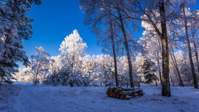 Frozen forest at dawn in winter Royalty Free Stock Image