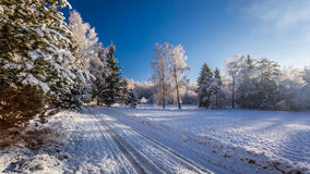 Frozen forest at dawn in winter Stock Images