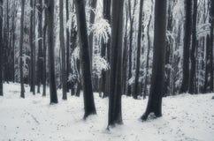 Frozen forest in dreamy winter fantasy stock photos