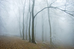 Frozen forest with fog in late autumn Stock Images