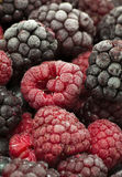 Frozen forest fruit. Macro image of frozen forest fruit berries Royalty Free Stock Photo