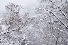 Frozen forest in Fukushima, Japan. Snow falling to the tree in winter of Fukushima, Japan stock photos