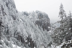 Frozen forest. The frozen forest on the high mountains in Taiwan in mid winter Stock Photography