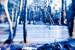 Frozen forest lake Royalty Free Stock Images